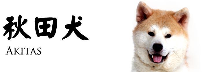 秋田犬 AKITAS,dog,dog like mammal,dog breed,mammal,dog breed group