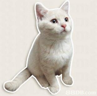 Cat,Vertebrate,Small to medium-sized cats,Mammal,Felidae