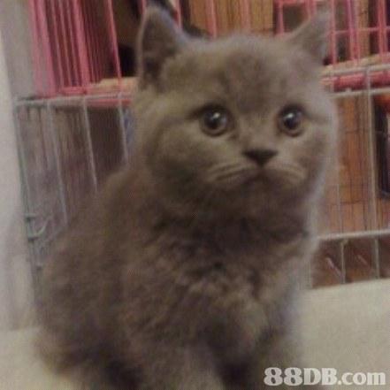 Cat,Mammal,Vertebrate,Small to medium-sized cats,Felidae
