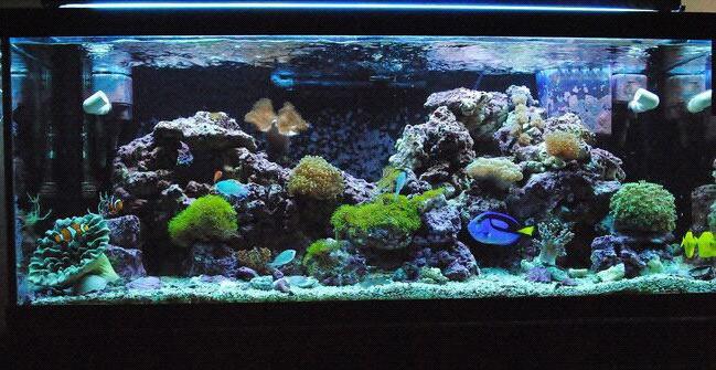 reef,coral reef,aquarium,aquarium lighting,freshwater aquarium