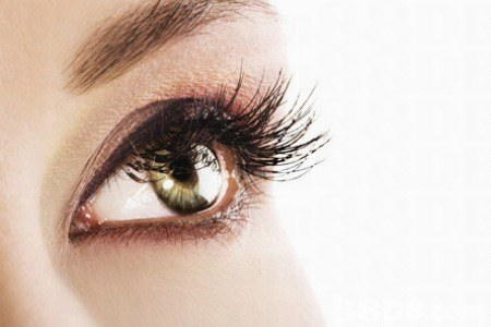 eyebrow,eyelash,eye,close up,eyelash extensions
