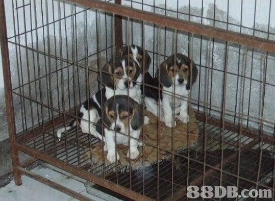 88DB.com  dog like mammal,dog,dog breed,dog breed group,animal shelter