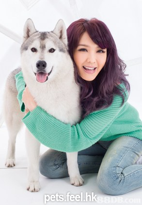 pets.feel.h,dog like mammal,dog,dog breed,sakhalin husky,siberian husky