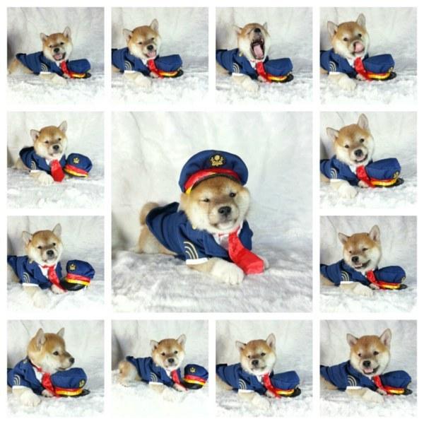 dog like mammal,dog,dog clothes,carnivoran,winter