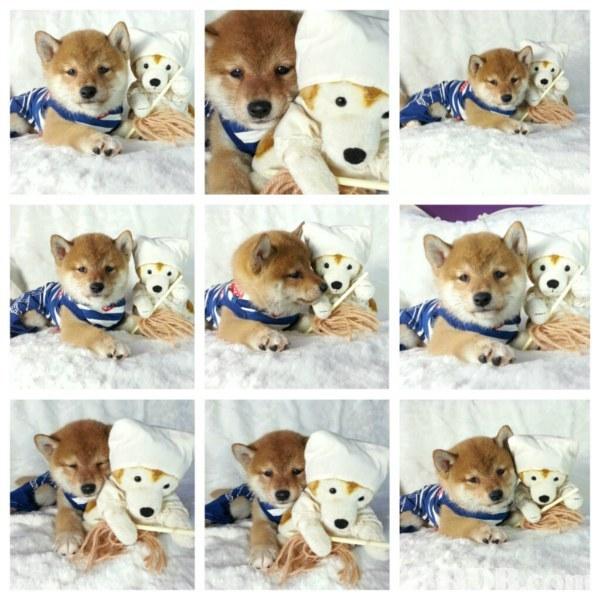 dog,dog like mammal,dog breed,dog breed group,stuffed toy