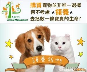 片 D 購買寵物並非唯一選擇 何不考慮*領養* 去拯救一條寶貴的生命? AFCD Anlmal Mamagement 青我們  dog,dog breed,cat,dog like mammal,puppy