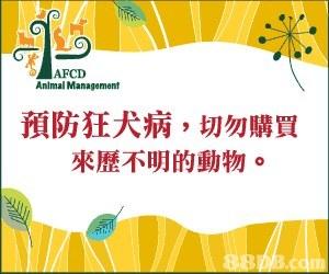 AFCD Animal Management 預防狂犬病,切勿購買 來歷不明的動物。  text,yellow,font,line,flower