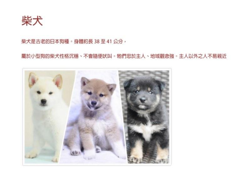 柴犬 柴犬是古老的日本狗種。身體約長38至41公分 屬於小型狗的柴犬性格沉穩、不會隨便吠叫。牠們忠於主人、地域觀念強。主人以外之人不易親近,dog,dog like mammal,dog breed,mammal,dog breed group