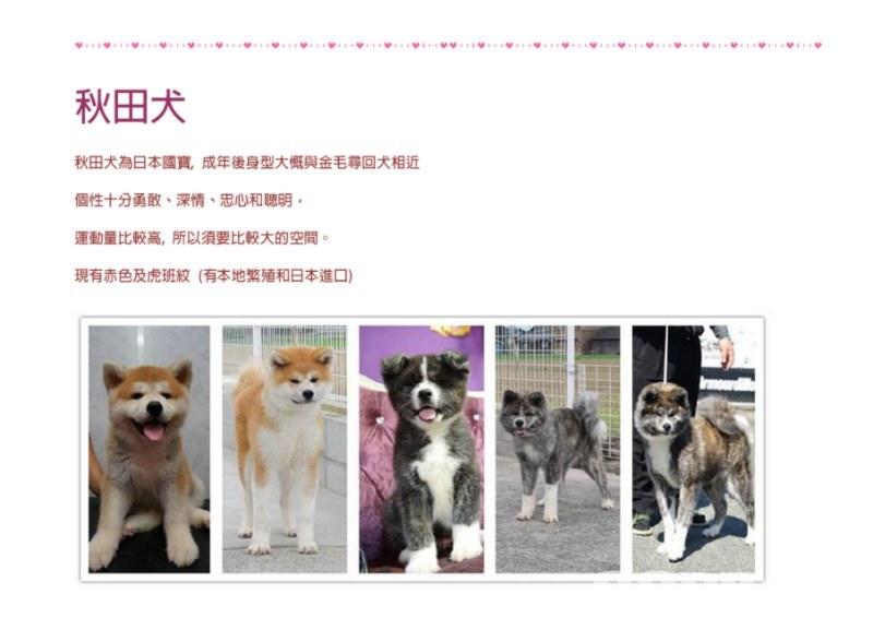 秋田犬 秋田犬為日本國寶,成年後身型大慨與金毛尋回犬相近 個性十分勇敢、深情、忠心和聰明。 運動量比較高,所以須要比較大的空間。 現有赤色及虎班紋(有本地繁殖和日本進口) 灩[.ittuitti!,dog,dog breed,dog like mammal,dog breed group,fauna