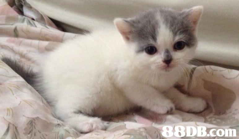 m,cat,mammal,small to medium sized cats,cat like mammal,vertebrate