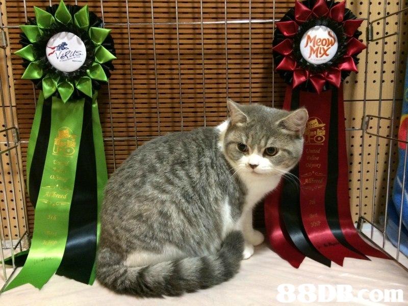 cat,small to medium sized cats,mammal,vertebrate,cat like mammal