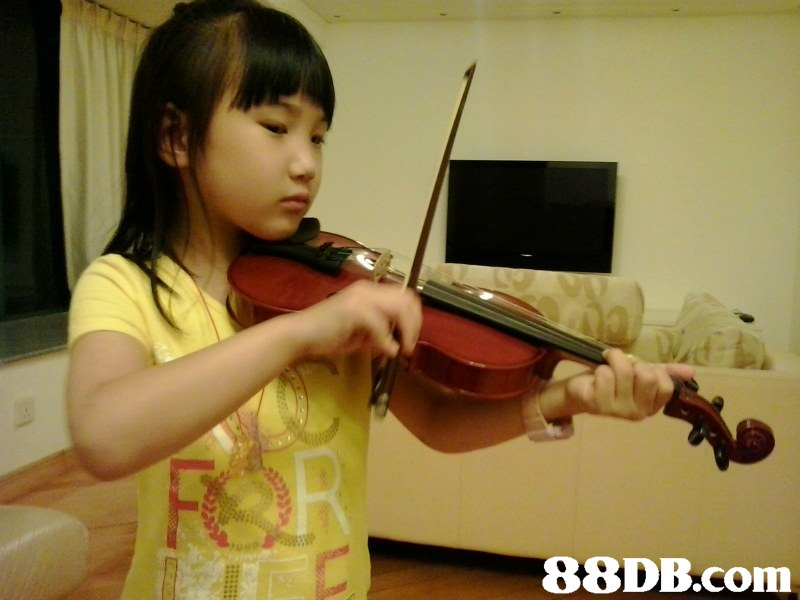 violin,viola,musical instrument,violin family,violinist
