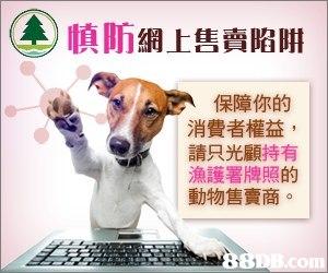 A)慎防網上售賣陷阱 保障你的 消費者權益 請只光顧持有 漁護署牌照的 動物售賣商  Dog,Canidae,Companion dog,Dog breed,Snout