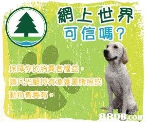 網上世界 可信嗎? 月: con  Canidae,Dog,Dog breed,Sporting Group,