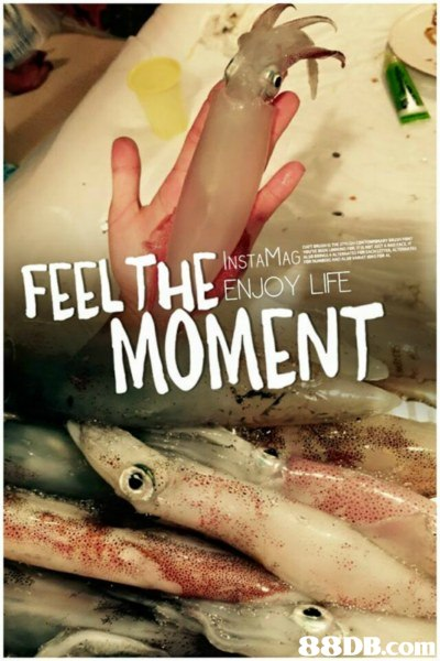 INSTAMAG ENJOY LIFE MOMENT,fish,seafood,animal source foods,mouth,organism