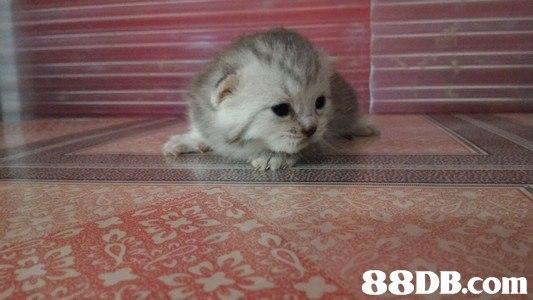 cat,mammal,small to medium sized cats,cat like mammal,vertebrate