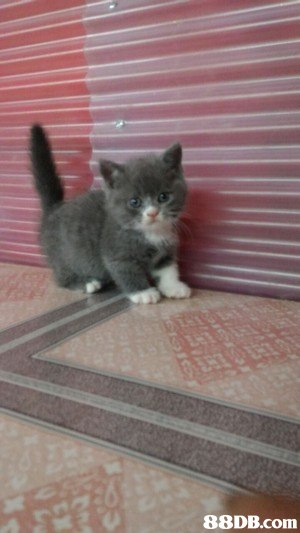 cat,small to medium sized cats,mammal,cat like mammal,vertebrate