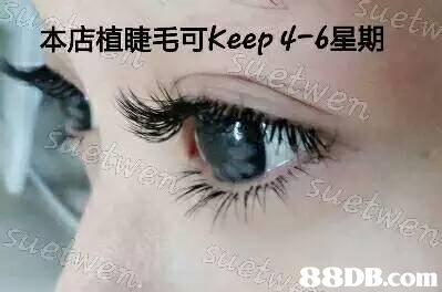 本店植睫毛可keep 4-6星期 88DB.com  eyebrow