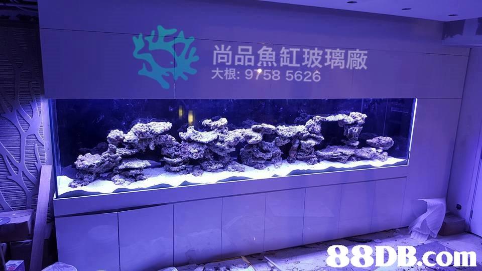 尚品魚缸玻璃廠 大根: 9758 5626   blue,aquarium lighting,purple,aquarium,reef