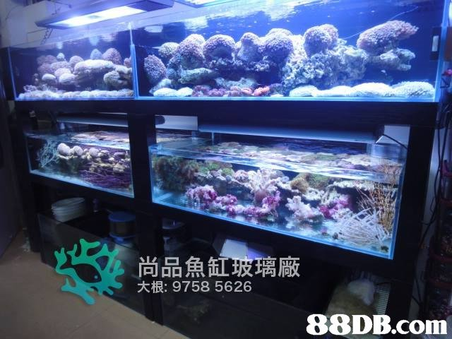 尚品魚 玻璃廠 大根: 9758 5626   aquarium,aquarium lighting,reef,coral reef,marine biology