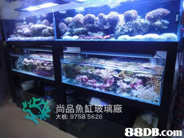 尚品魚 玻璃廠 大根: 9758 5626   aquarium,aquarium lighting,reef,coral reef,marine biology