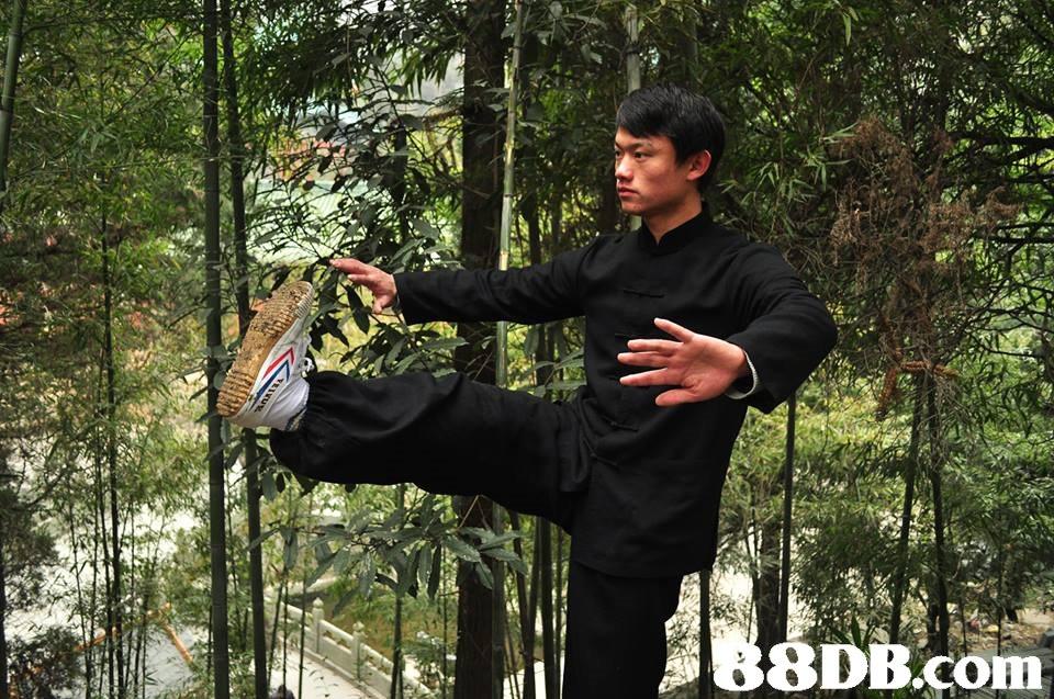 8DB.com,Kung fu,T'ai chi ch'uan,Kung fu,Wing chun,Baguazhang