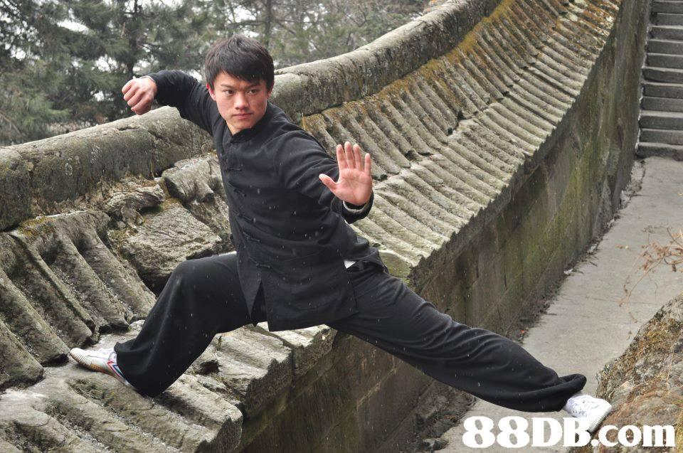 88Db.com,Kung fu,Kung fu,Baguazhang,T'ai chi ch'uan,Northern Praying Mantis (martial art)