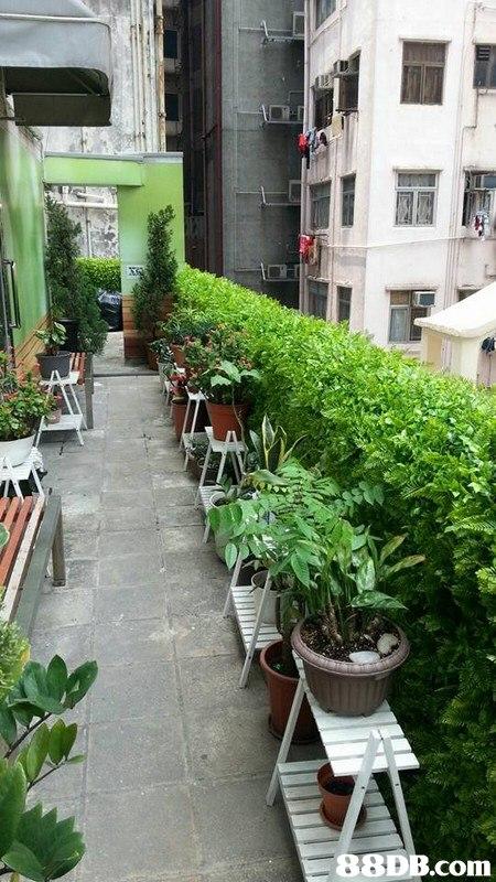 Flowerpot,Plant,Balcony,Courtyard,Flower