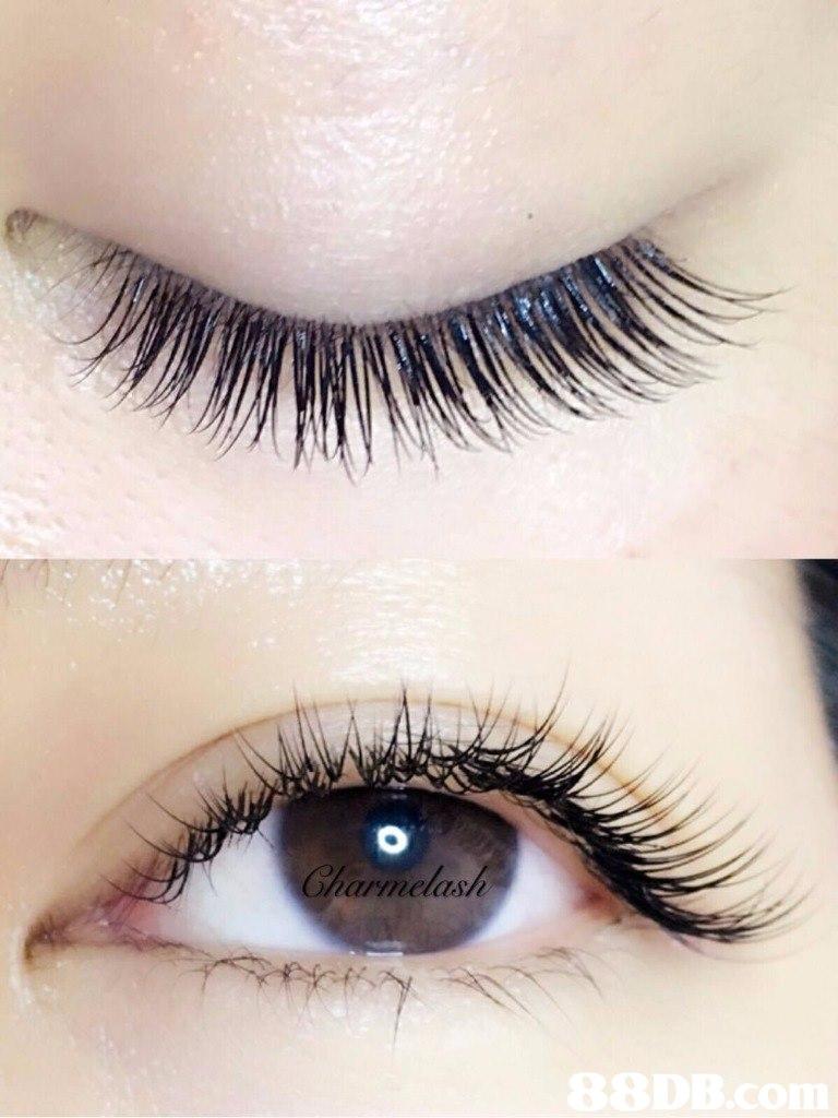 Charmelash  eyelash,eyebrow,eye,cosmetics,eyelash extensions