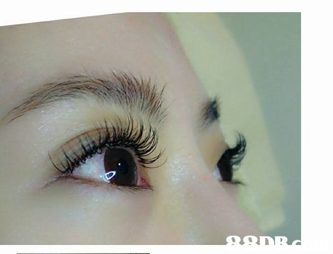 eyebrow,eyelash,eye,close up,eyelash extensions