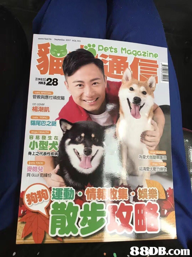 www.feel.hk September 2017 VOL195 Pets Magazine HKS 管教與應付頑皮貓 on cover 楊潮凱 cats TOPIO 貓尾巴之 dogs HEALTH 容易發生在 小型犬 身上之代表性疾病 為愛犬做簡單護 dogs pets FACE 認清愛犬壓力信号 麥皓兒 與GUJI的緣份 . .88DB.com  dog,dog like mammal,poster,dog breed group,magazine