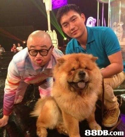 購買幼犬最有保障的犬舍♥純種 健康 信譽 信心 No.1 讓你安心 -doggie.hk