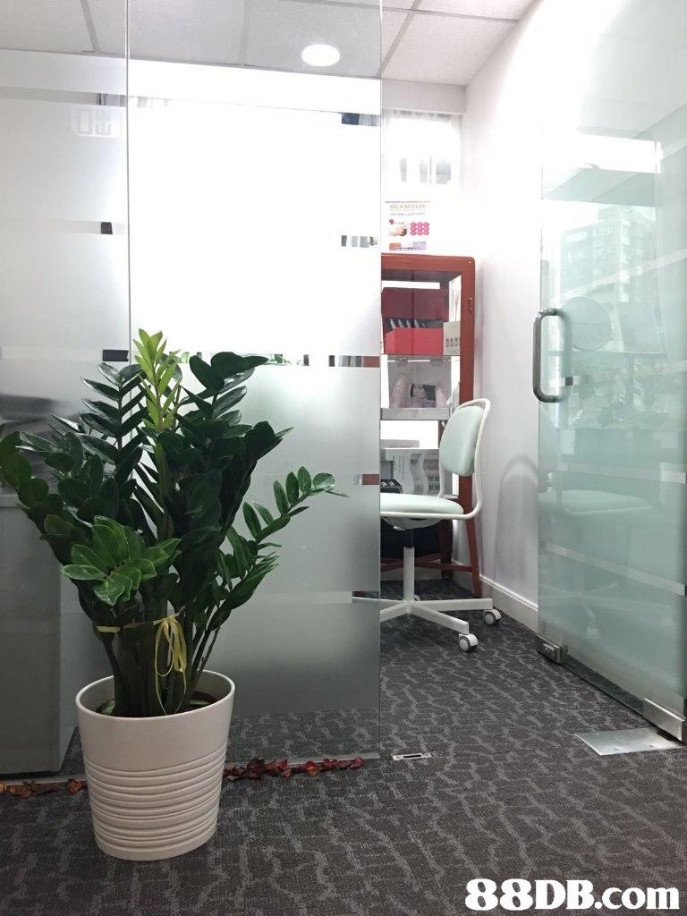 Property,Room,Houseplant,Interior design,Plant