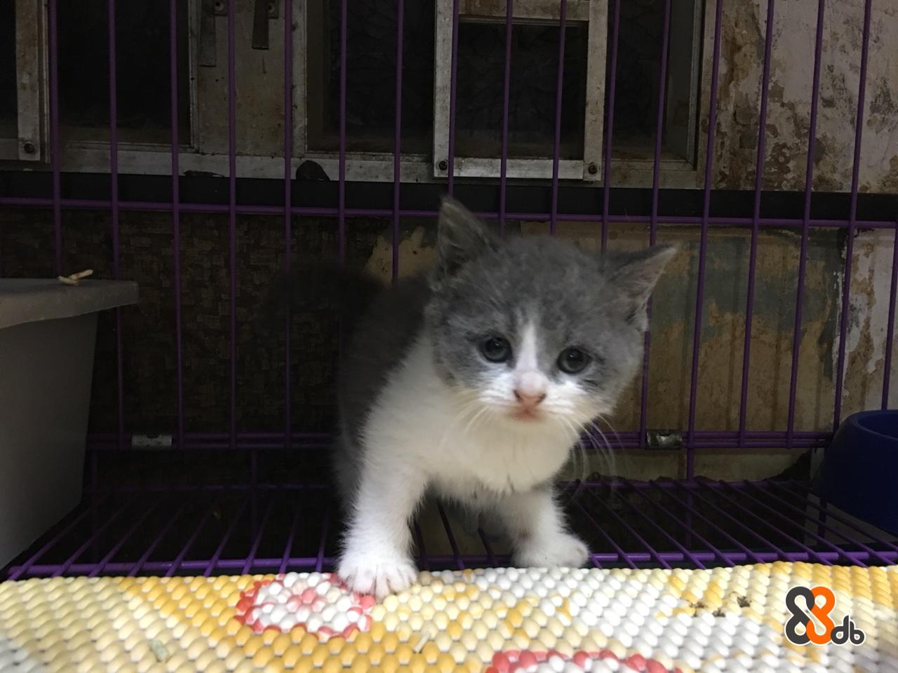 cat,small to medium sized cats,cat like mammal,whiskers,fauna