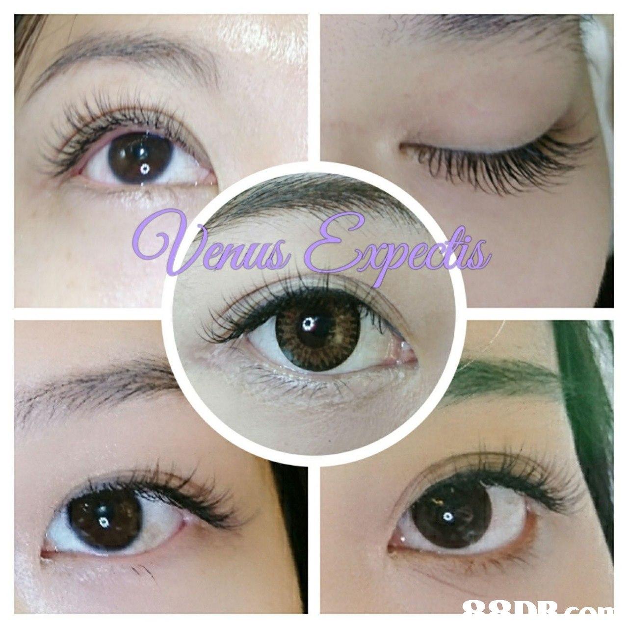eyebrow,eyelash,eye,cosmetics,eye shadow