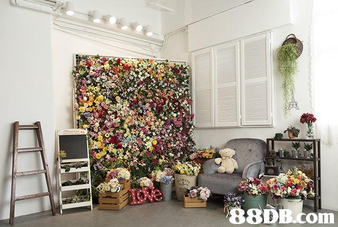 B8DB.com  flower