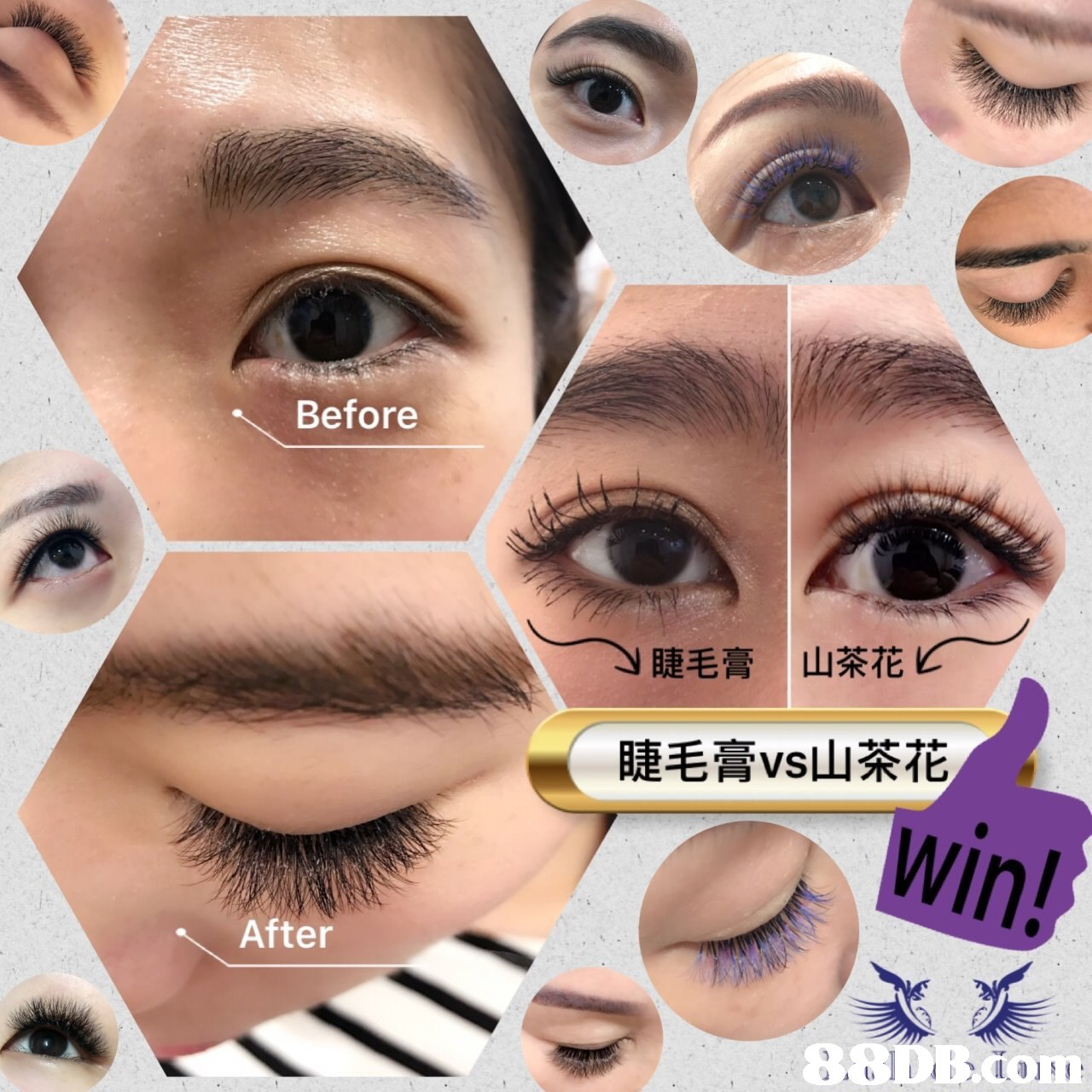 Before 睫毛膏 山茶花 睫毛膏vs山茶花 After  eyebrow,eyelash,eye shadow,eye,nose