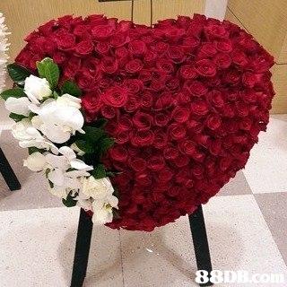 8 8DB.com  Flower,Bouquet,Red,Cut flowers,Plant
