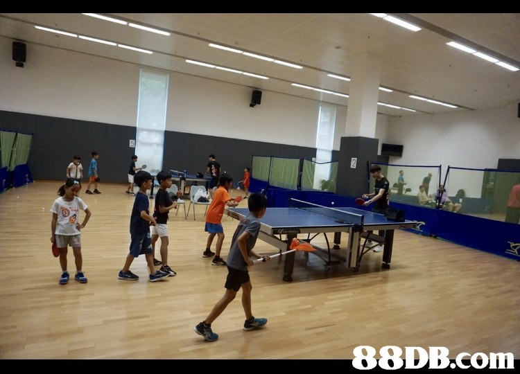 sport venue,sports,indoor games and sports,table tennis,