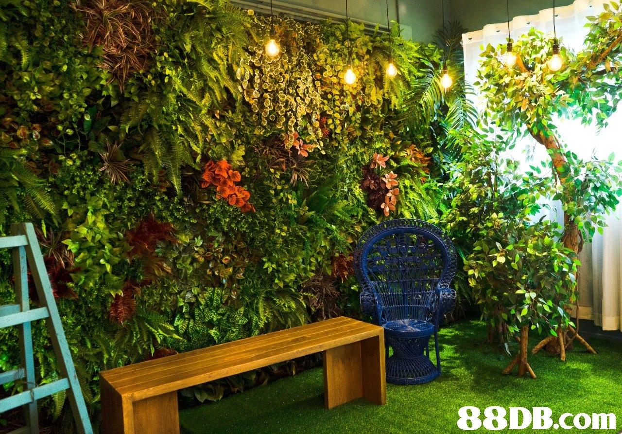 garden,plant,flora,backyard,yard