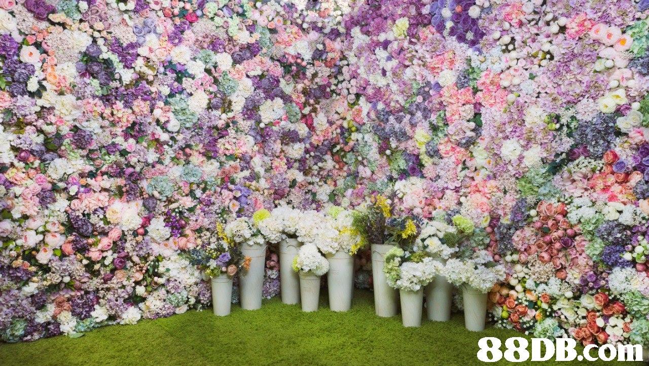 88DB.COM  flower,flower arranging,plant,floristry,spring