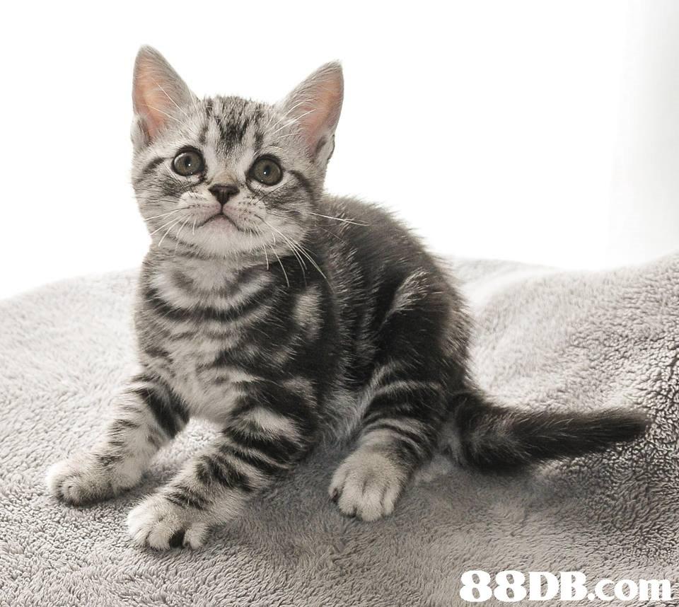 cat,mammal,small to medium sized cats,dragon li,cat like mammal