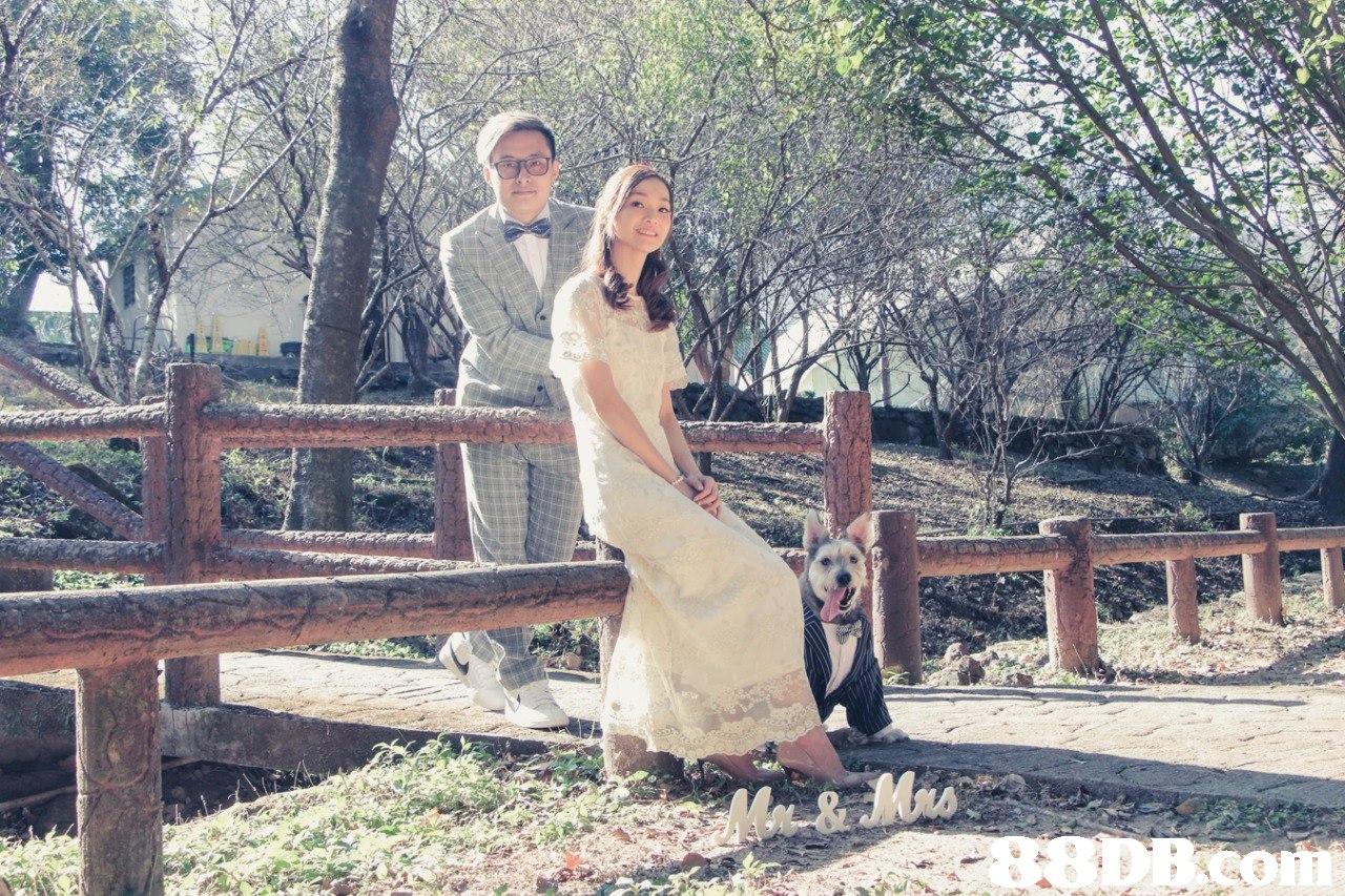 photograph,dress,bride,wedding dress,wedding