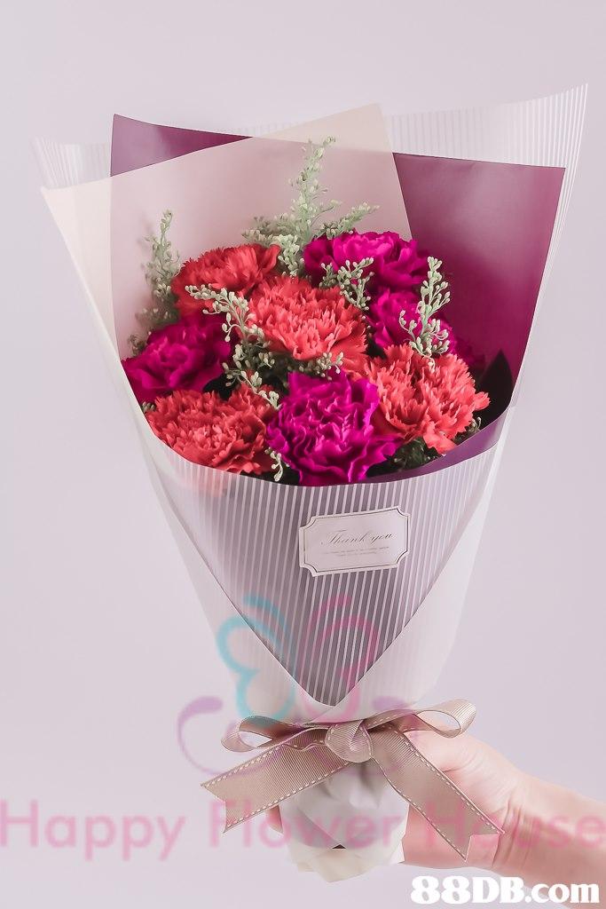 Happy 88DB.com  flower