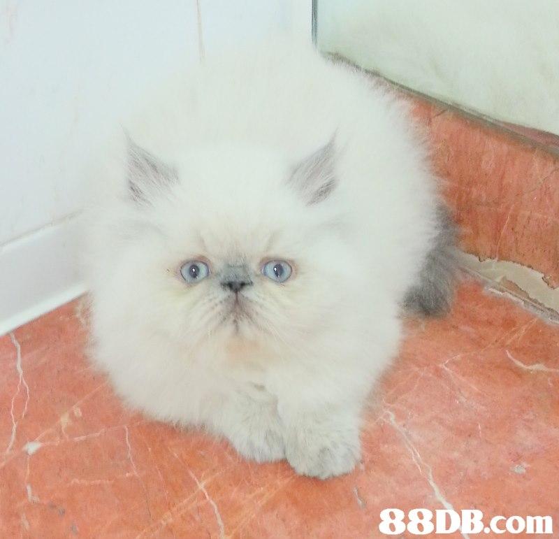 3 с  cat,small to medium sized cats,mammal,cat like mammal,vertebrate
