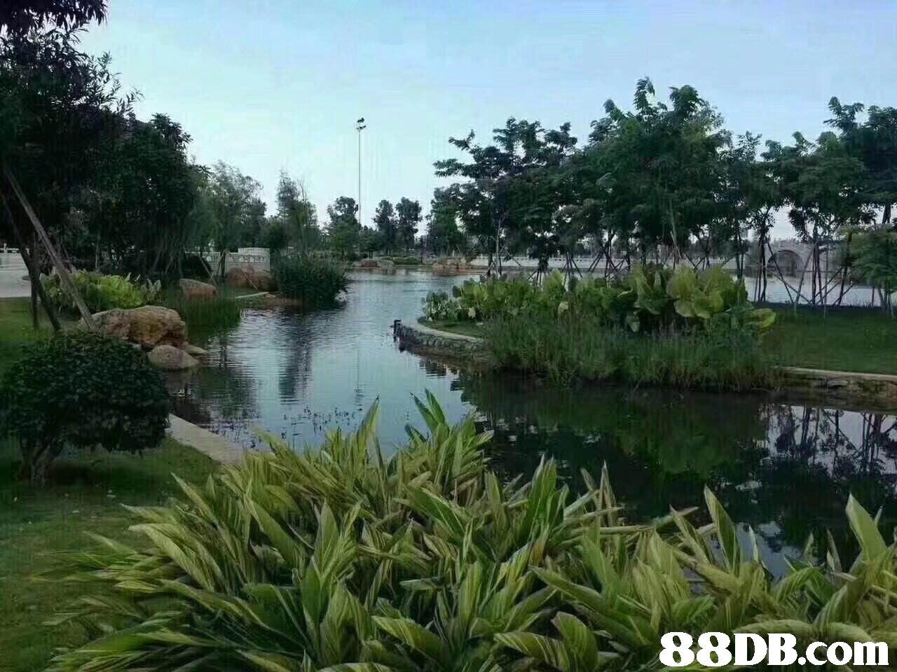 waterway,nature reserve,vegetation,tree,plant