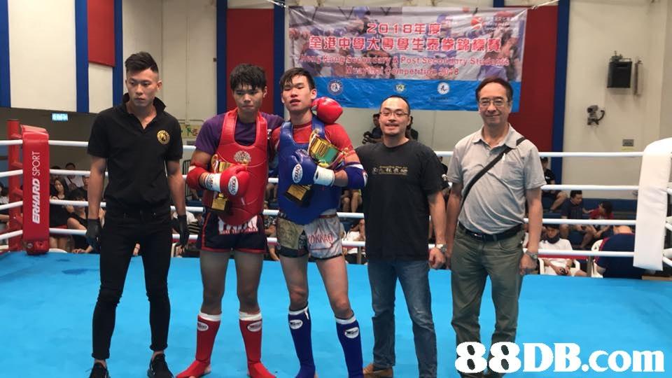 88DB.com  boxing ring