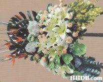 88DB.com  plant