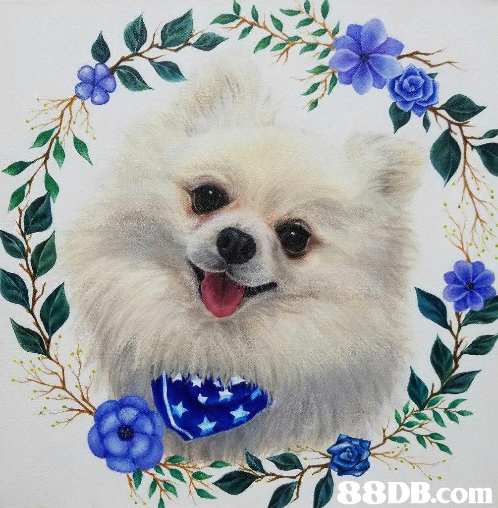 88DB.com  dog like mammal