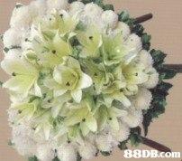 88DB.com  flower
